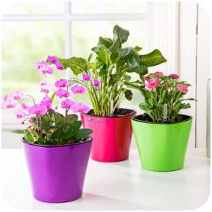 Creative auto watering pots succulents pots font b plastic b font flower pot font b storage